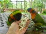 Recherche oiseaux, vente Matériels 41-32