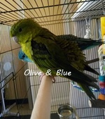 Recherche oiseaux, vente Matériels 441-18