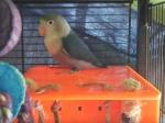 Recherche oiseaux, vente Matériels 55-76
