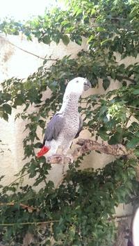 Forum Bird And You sur les Becs crochus 583-24