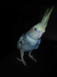 Forum Bird And You sur les Becs crochus 792-65
