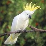 Recherche oiseaux, vente Matériels 84-54