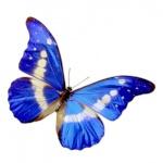 Papillon Ménestrel