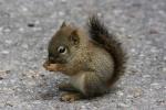 MamaSquirrel
