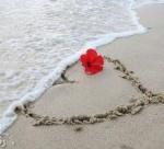 ريحانة المحبة