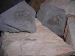 Les Ammonites, les Bélemnites, les Encrines,  les Oursins, fossiles 134-66