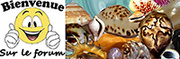 Iberus-shells.com, boutique en ligne de coquilles terrestres et d'eaux douces 3111811461