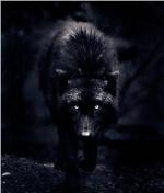 Blackwulff