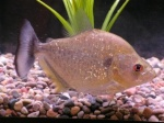 Tropical Fish Auction customer care 1-78