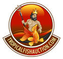 Tropical Fish Auction customer care 26-69