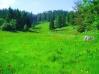 Album br.1 Priroda iz nase okoline.. 001_b_10