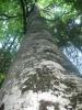 Album br.1 Priroda iz nase okoline.. Amir2610