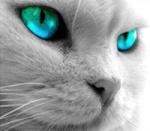 Ojo de Gato
