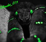 Snake_019