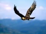 volare alto