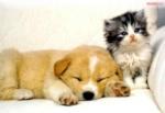 catlovedog_thao2510