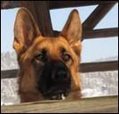 dog_lover*