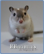 BBgerbilles