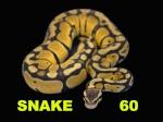 SNAKE60