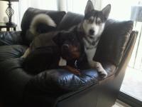 Diego&Roscoe