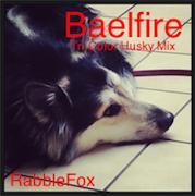 RabbleFox