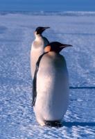 penguinboy247