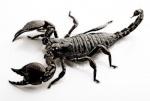 Black__Spider