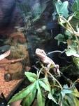 Reptile Chablais