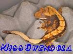 MissGwendola