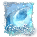 canelledu29