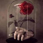Amorthancia