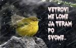 apolonija