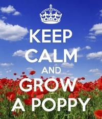 Ms Poppy