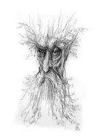 treebeard79