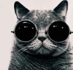Добрый Кот