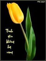 tulip_nguyen