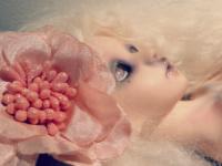 celeste-papillon
