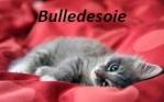 Bulledesoie