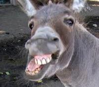 Donkeyyyyyy