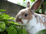 Vicky-le-lapin