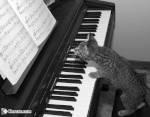 bad pianist