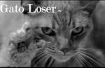 CatLoser~