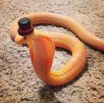 snake972