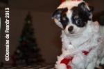 Sauvetage, Chihuahua perdu, trouvé 241-7