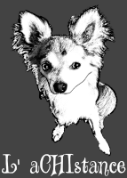 Sauvetage, Chihuahua perdu, trouvé 436-13