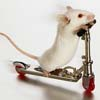 mousedrag