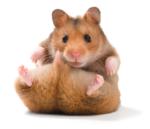 3D-Hamster