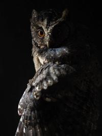 Owlkiwz