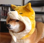 Foxyte