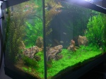 Aquariums plantés - Aquascaping 1093-87